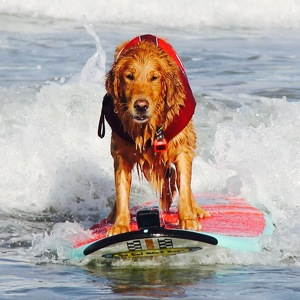 Fundraising Page: Surfdog Turbo